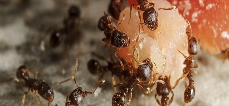 Ants Control Ryde