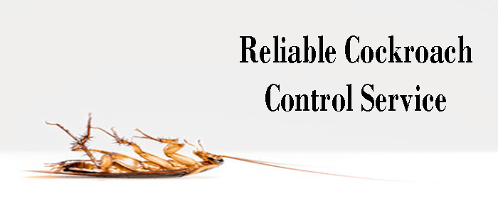 Reliable Cockroach Control Service in Ryde